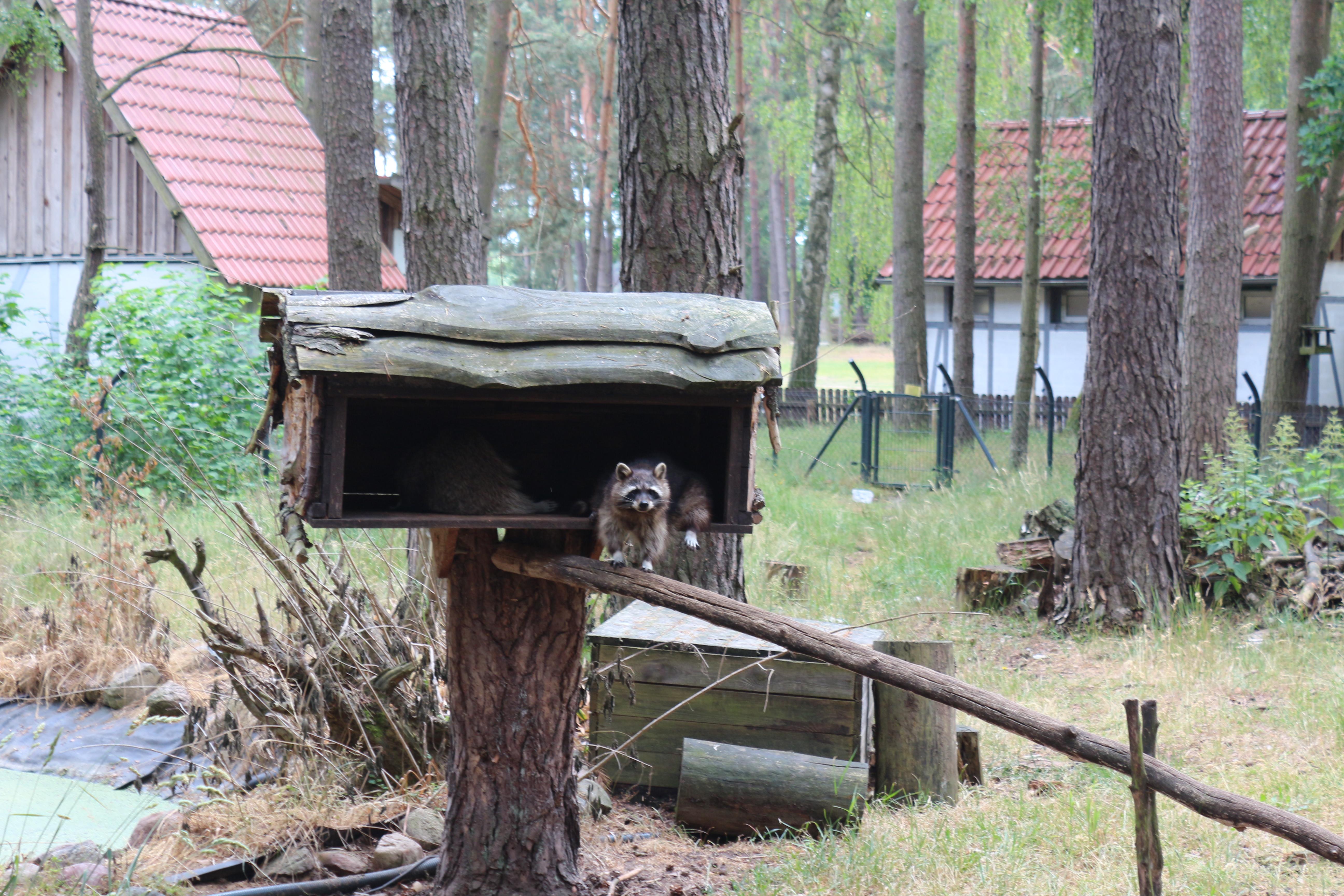 Wildpark Schorfheide